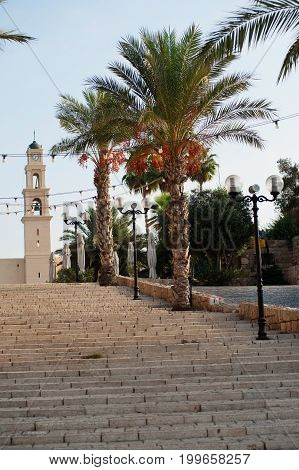 The old street Kikar Kedumim. Stone stairs, palms and St. Peter's Church in old town of Jaffa, Israel. Early morning light