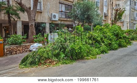 Big Pile Of Pruned Green Branches On The Street