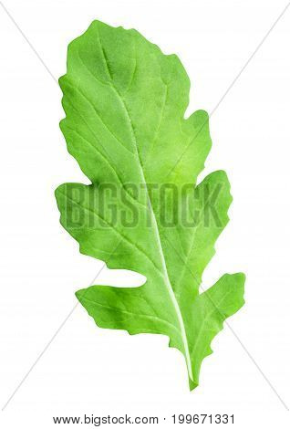 arugula isolated on white background with clipping path