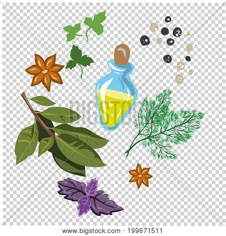 spices and flavorings vector isolated on transparent background