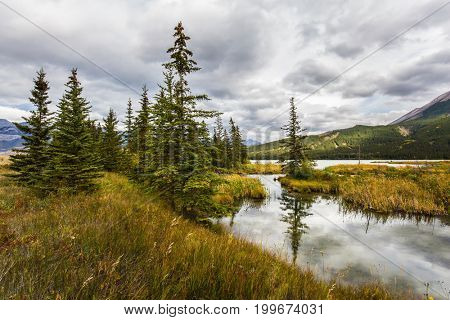 Magnificent journey through the Rocky Mountains of Canada. Shallow-water lake, firs and mountains. The valley along the Pocahontas road. Concept of active and ecological tourism