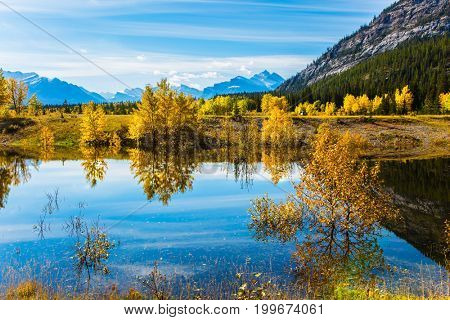 Sunny autumn day in the Rocky Mountains of Canada. The mirror surface of artificial Abraham lake reflects light cirrus clouds and trees. The concept of ecological and active tourism