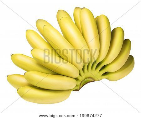 Branch Of Baby Bananas Isolated On White Background