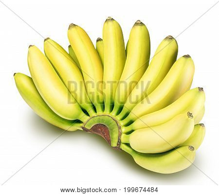 Branch of baby bananas isolated on white background with clipping path