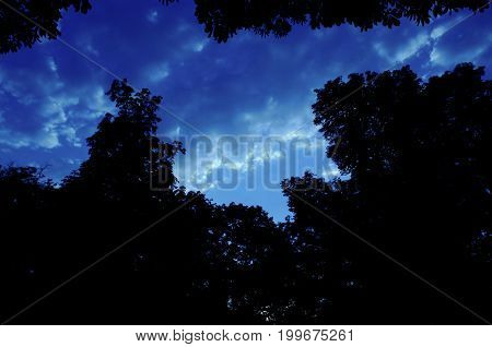 Mystically bright-blue evening sky with cumulus clouds and dark silhouettes of tree tops