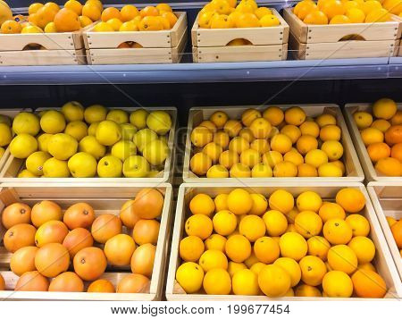 Fresh juicy oranges and grapefruits on store shelves Photo