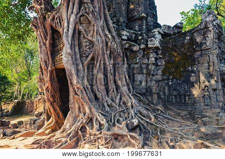 Ancient Temple Entrance And Old Tree Roots At Angkor Wat