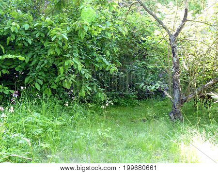 Secluded Place Of The Old Unmaintained Garden With Bushes And Dead Tree