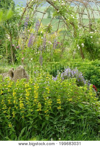 Flower Garden With Yellow Loosestrife And Willow Tunnel