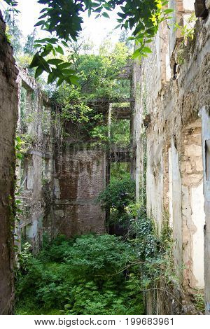 Destroyed by war,overgrown by trees and ivy ruins of apartment house in Tquarchal, Abkhazia