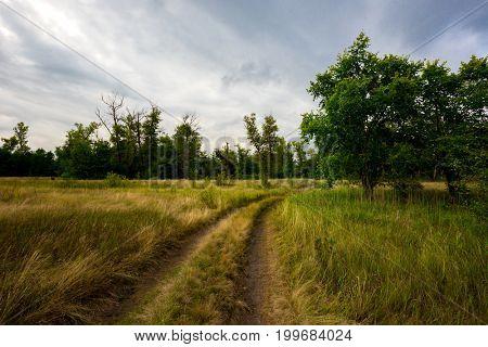 rut road in steppe