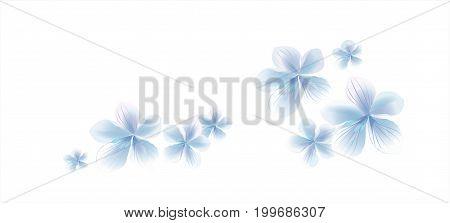 Flowers design. Flowers background. White Blue flying flowers isolated on white background. Apple-tree flowers. Cherry blossom. Vector