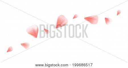 Vector_bg_pink_petals_on-white_102.eps