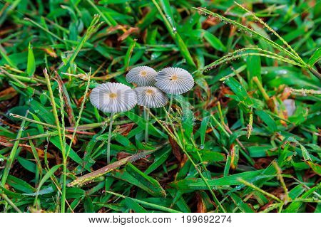 Mushroom grown in the grass Background unit isolate