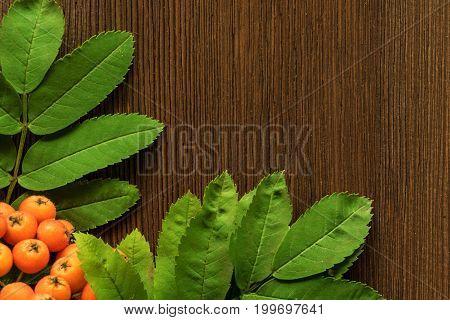 Orange rowan berries with green leaves on brown wooden background