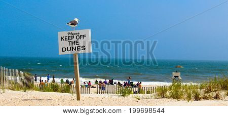 when a seagull doesnt listen to the sign