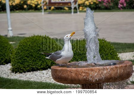 Single Seagull By The Side Of A Fountain