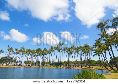 Palm grove near water on the tropical island Hawaii USA. Scenic view on the tall palm trees of Waikiki beach marina.