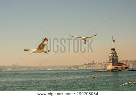 Seagull In A Sky With A Maiden`s Tower