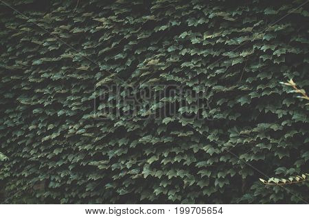 Green Cover Decoration