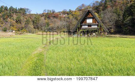 Fall Season Of Historic Villages Of Shirakawa-go And Gokayama, Japan