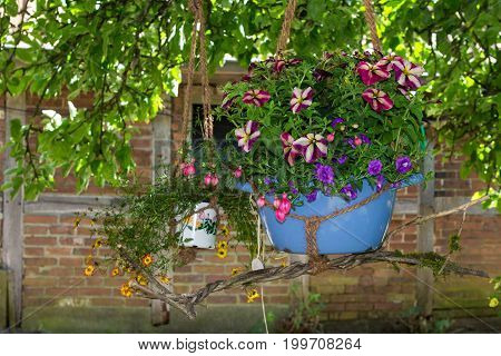 A hanging basket with fuchsia and petunia homeplants placed at a old tree.