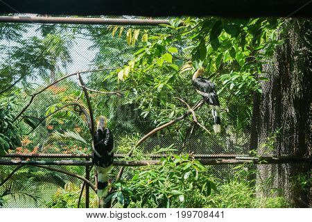 two hornbills in cage in tropical zoo