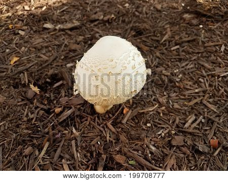 a white mushroom or fungus in the dirt