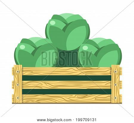 Green leafy cabbage in wooden box isolated cartoon vector illustration on white background. Healthy vegetable with lot of vitamins folded in container for sale at market. Organic product from farm.