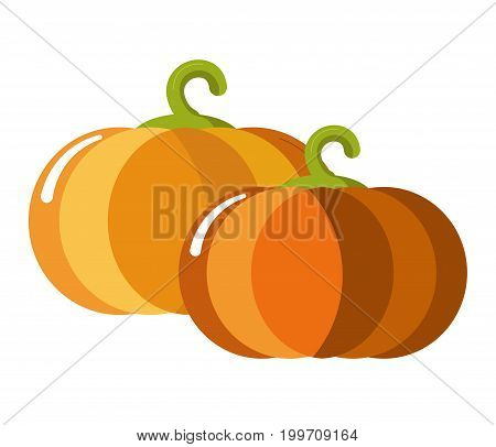 Ripe juicy sweet pumpkins with curled stem isolated cartoon flat vector illustration on white background. Organic vegetable with shiny skin grown at farm. Natural product with delicious taste.