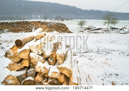Snow-covered Log Pile