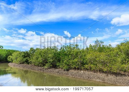 lanscape of tropical beach with mangrove tree in southern in Thailand