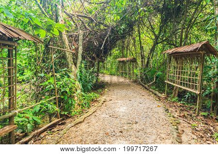 Wooden bridge and mangrove forest in the thailand