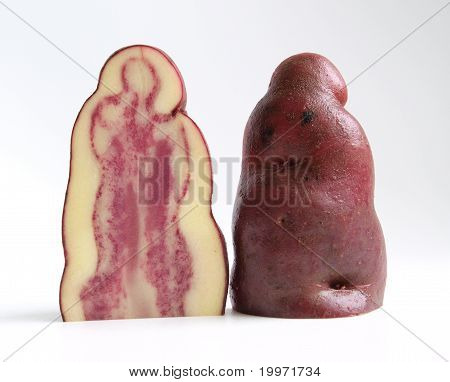 Potato tuber section of native Andes variety
