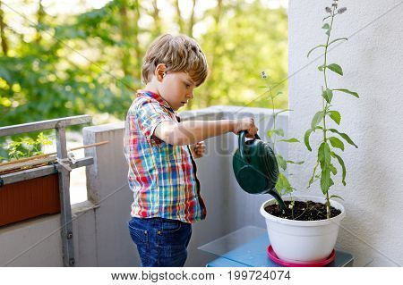 Active little preschool kid boy watering plants with water can at home