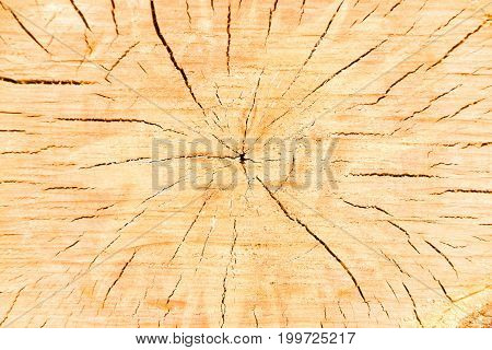 Cut of a tree trunk with age rings and cracks