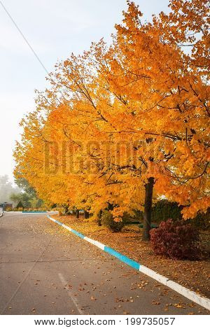 City street in autumn time. Fallen leaves cloudy and rainy weather. Beautiful colours in the country town