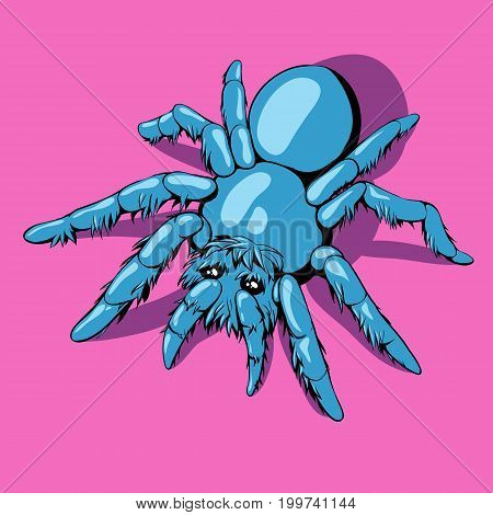 Blue spider. Shaggy tarantula. Very cute. Pink background.