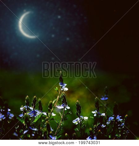 flower field on the night sky. nature abstract
