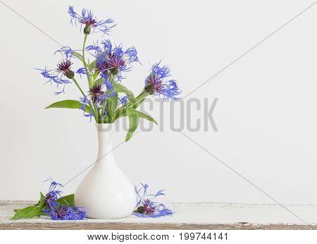 the cornflower in vase on white background