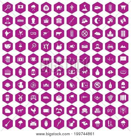 100 cow icons set in violet hexagon isolated vector illustration