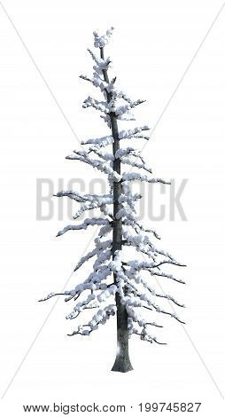 3D rendering of a spruce under snow isolated on white background