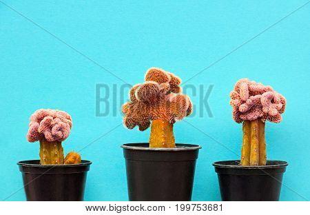 Cactus Fashion Design Set. Minimal fashion Stillife. Trendy Bright Colors. Pink Cactus Mood on Blue background