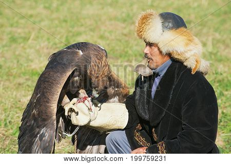CIRCA ALMATY, KAZAKHSTAN - SEPTEMBER 18, 2011: Unidentified kazakh hunter feeds golden eagle (Aquila chrysaetos) Almaty, Kazakhstan.