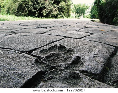 A beautiful print of the dog's paw on the stone tile path