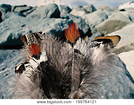 Beautiful different feathers of pheasants on the background of stones on the seashore