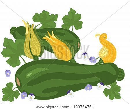 an illustration of courgette plants with foliage and flowers on a white background