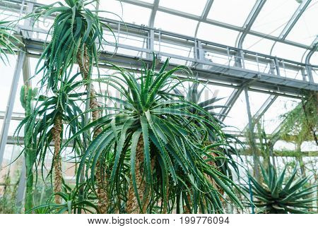 Palm branches on the background of the orangery's dom