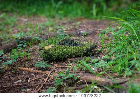 moss covered shoe at wooden environment nature