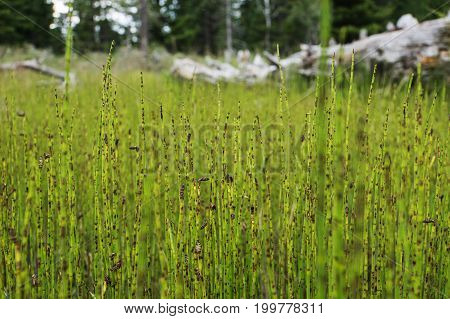 Green Grass In Autumn On A Background